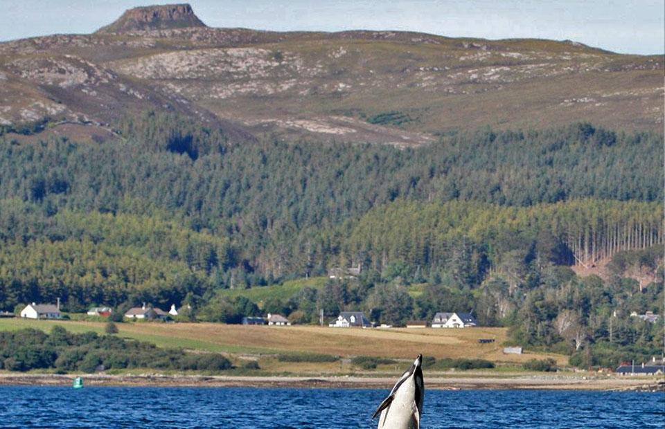 Dun Caan, Isle of Raasay with Dolphin